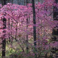 Pink woods...