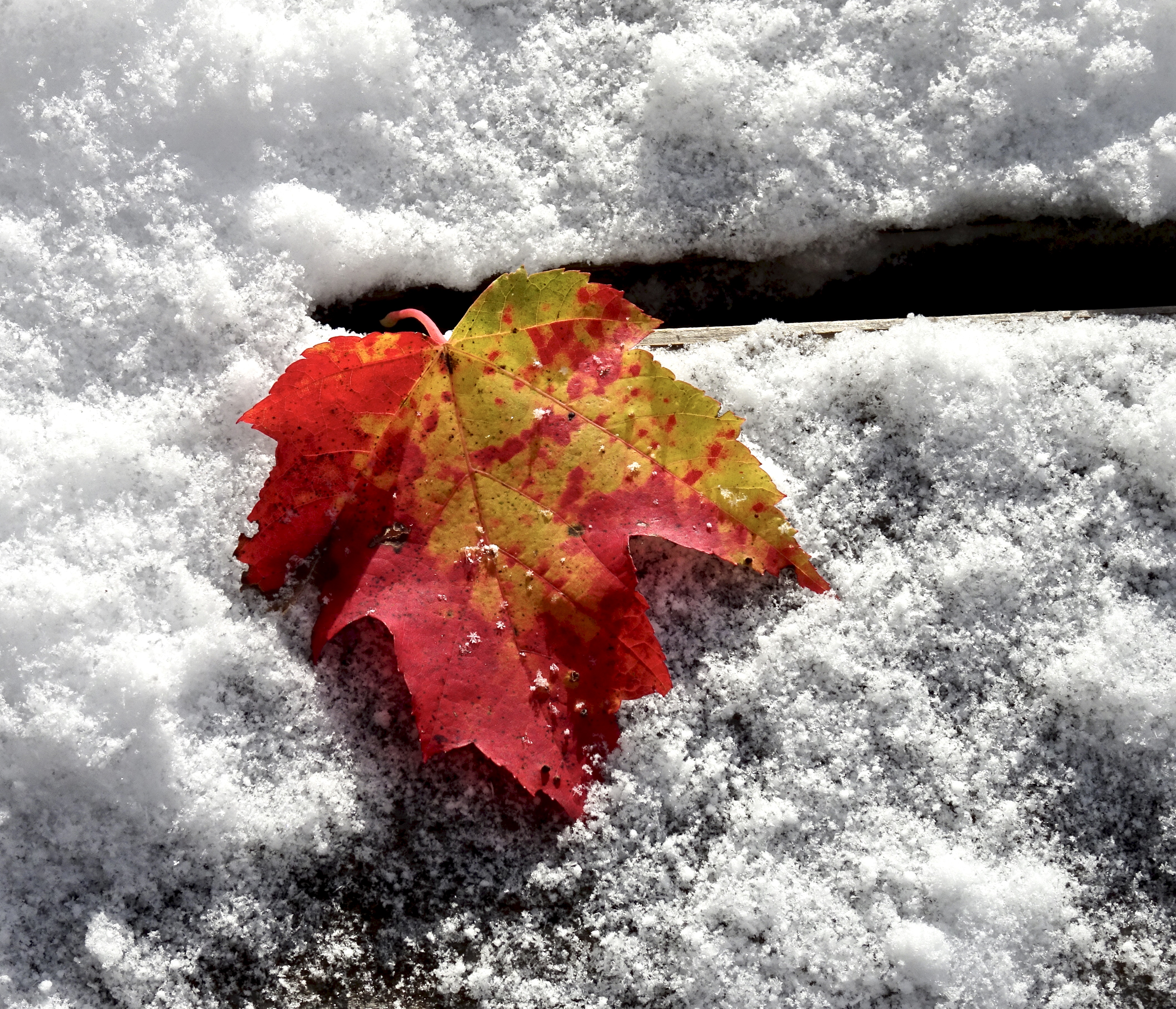 October Snow — leaf and twig